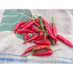 PimentSUCETTE DE PROVENCE - BIO - Agriculture biologique