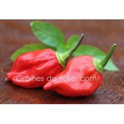 PimentBHUT JOLOKIA Graines pepper seeds