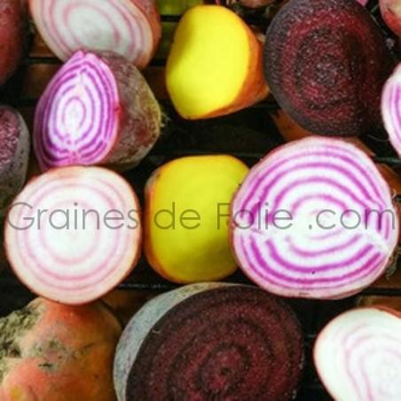 BETTERAVE - 4 Couleurs - graines - semences anciennes