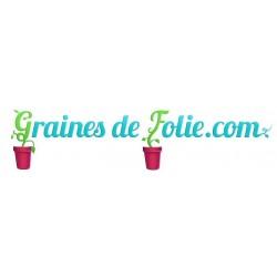Piment SCOTCH BONNET ROUGE Graines