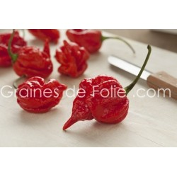Piment TRINIDAD SCORPION - Graines pepper seeds