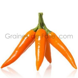 Piment orange BULGARIAN CAROT Graines