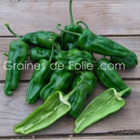 Piment PADRON - Graines pepper seeds