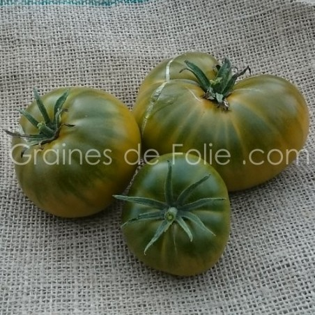 Tomate verte bronze DOROTHY GREEN BIO graines semences