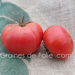 Tomate RUSSE ROUGE - BIO *