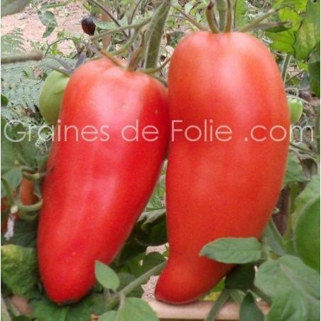Tomate coeur de boeuf HUNGARIAN HEART - BLUE BEECH - BIO * - graines semences anciennes certifiées agriculture biologique
