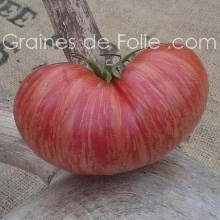 Graines de TomateVINTAGE WINE - graines semences anciennes