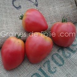 Tomate Coeur de Boeuf GRUSHOVKA - BIO * - graines semences certifées agriculture biologique