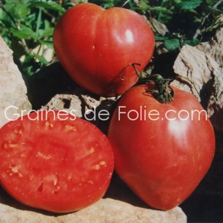 Tomate ANNA RUSSE