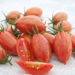 Tomate cerise ARTISAN PINK TIGER graines semences
