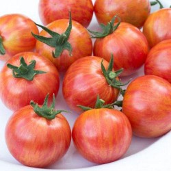 Tomate ARTISAN PINK BUMBLE BEE - graines semences tomato seeds