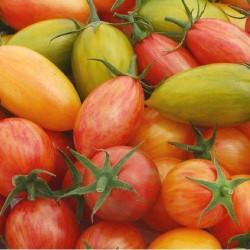 Tomate cerise Pack 6 variétés ARTISAN graines semences