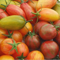 Tomate Pack ARTISAN - graines semences tomato seeds