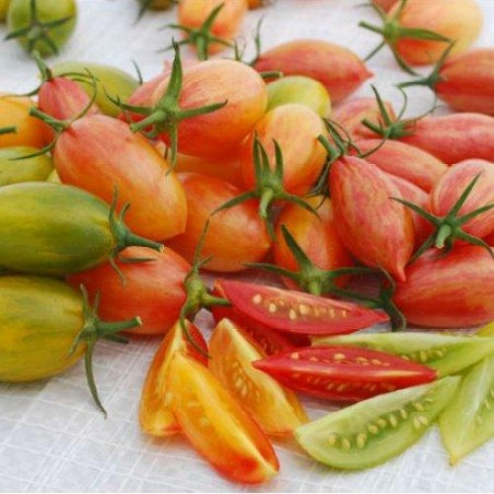 Tomate omate - Pack TIGER - graines semences tomatoes seeds
