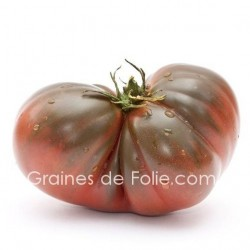 Tomate BRANDYWINE NOIRE graines semences ancienne