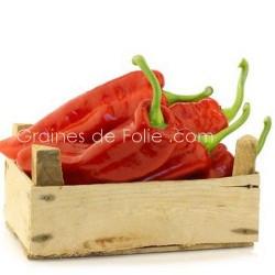 PimentMARCONI ROUGE - variété italienne ancienne graines semences