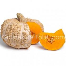 Potiron GALEUX d'EYSINES - semence graines