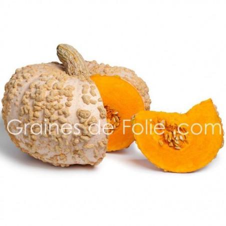 Potiron GALEUX d'EYSINES semence graines citrouille