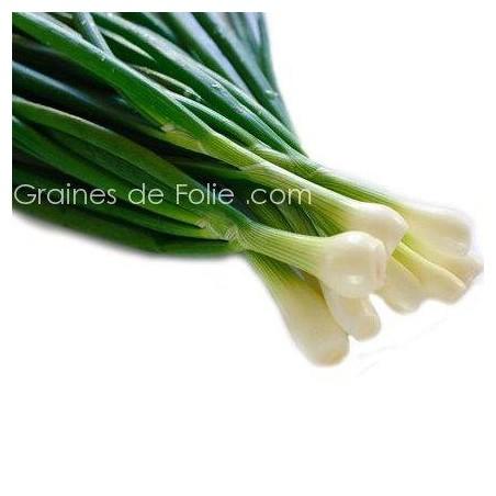 Oignon BLANC de LISBONNE