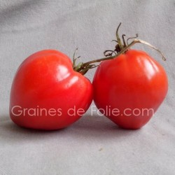TomateBIO CUOR DI BUE la vraie coeur de boeuf graines semences certifiées agriculture biologique
