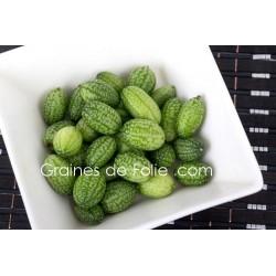 Concombre à confire CUCAMELON - semences graines melothria scabra seeds