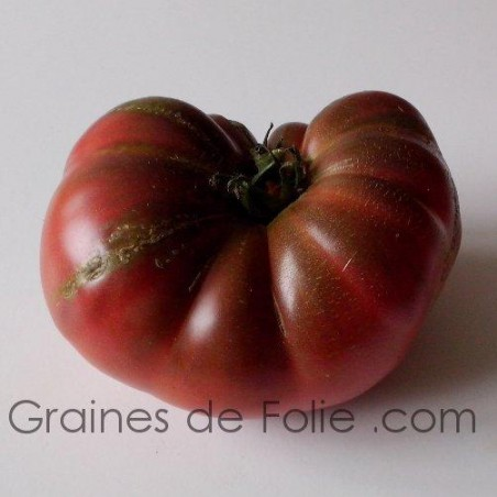 Tomate CHEROKEE PURPLE graines semences anciennes