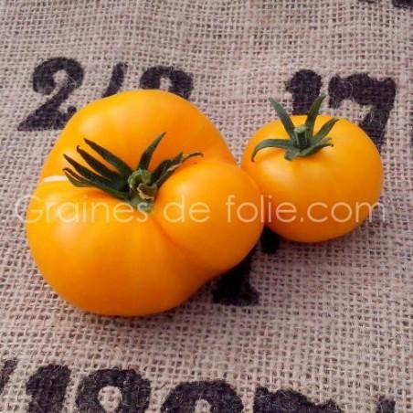Tomate JAUNE SAINT VINCENT BIO graines tomato