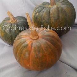 Courge FUTSU BLACK RINDED - semences graines certifiées agriculture BIOlogiques - seeds samen