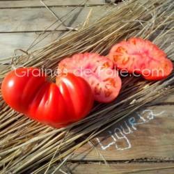 Tomate LIGURIA - graines semences bio certifiée agriculture biologique