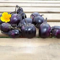 Aubergine BAMBINO - graines semences BIO agriculture biologique