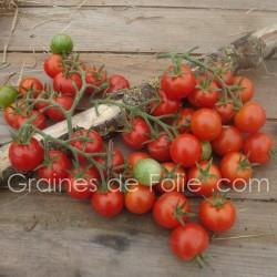Tomate MONTPLAISIR semences certifiées agriculture biologique france veritas Graines de Folie .com semences