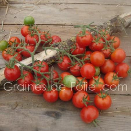 Tomate MONTPLAISIR - semences certifiées agriculture biologique france veritas - Graines de Folie .com - semences tomato seeds g