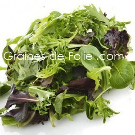 MESCLUN Traditionnel - graines semences