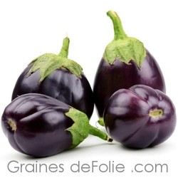 Aubergine MONSTRUEUSE DE NEW YORK - BIO *