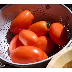 Tomate ROMA - BIO*