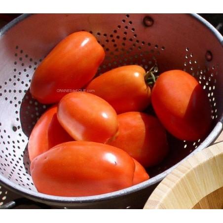 Tomate ROMA graines certifiée agriculture biologique