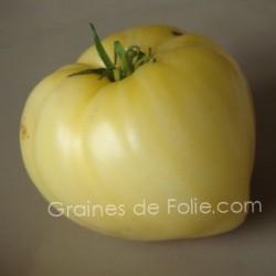 Tomate COEUR de BOEUF BLANC graines semences