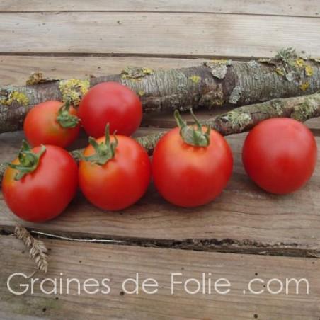 Tomate GLACIER - graines semences bio certifiées agriculture biologique tomato seeds