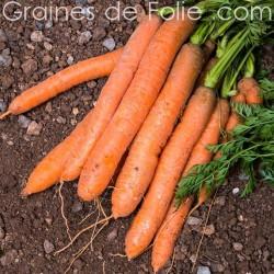 Carotte BERLICUM 2 graines semences de légumes