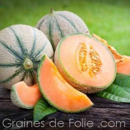 Melon Charentais PRÉCOCE DU ROC graines semences oubliées