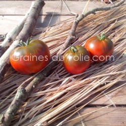 Tomate NYAGOUS