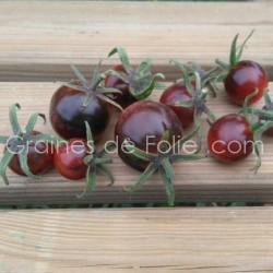 Tomate OSU BLUE Bio - graines semences tomato seeds