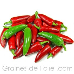 Piment JALAPENO graines semences pepper seeds