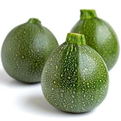 Courgette RONDE DI PIACENZA graines semences