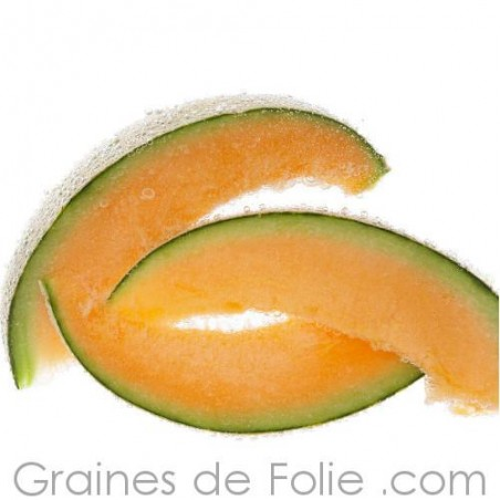 Bio Melon HALES BEST JUMBO graines semences