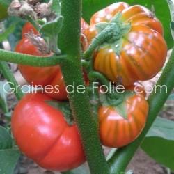 Bio Aubergine ROUGE DE TURQUIE graines semences eggplant seeds