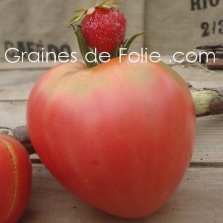 Tomate GERMAN RED STRAWBERRY graines semences certifiées agriculture biologique