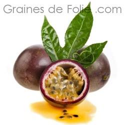 Grenadille - Passiflora edulis f.edulis semences graines samen seeds