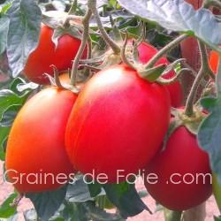 Tomate RIO GRANDE semences graines bio tomato seeds samen