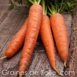 Carotte de COLMAR FLAKKEE 2 Rouge Longue graines semences anciennes